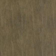 285459 DF15783 318 Bark by Robert Allen
