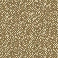 Falcon Dots Decorator Fabric by Kravet