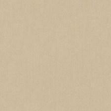 511892 DK61731 667 Seashell by Robert Allen