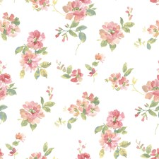 Peach Transitional Wallpaper Wallcovering by Brewster